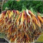 manojo-zanahoria-mezcla