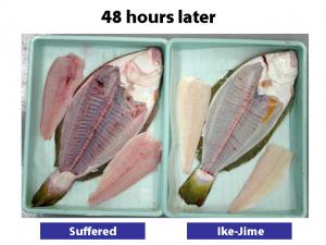 flounder02-300x225